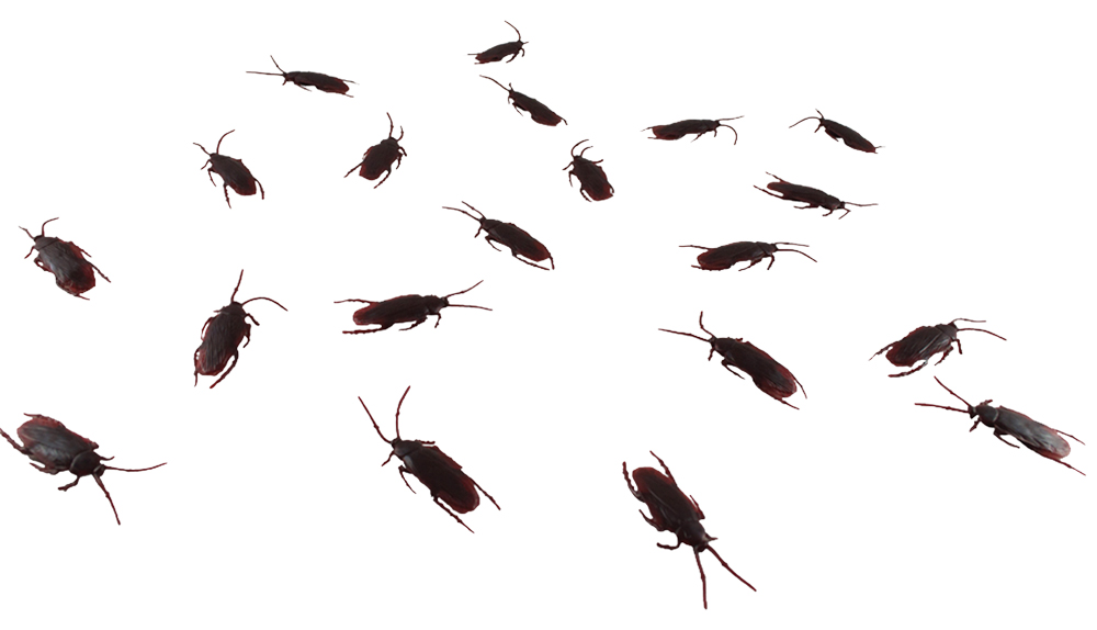 ROACH EXPLOSION - Set of 20