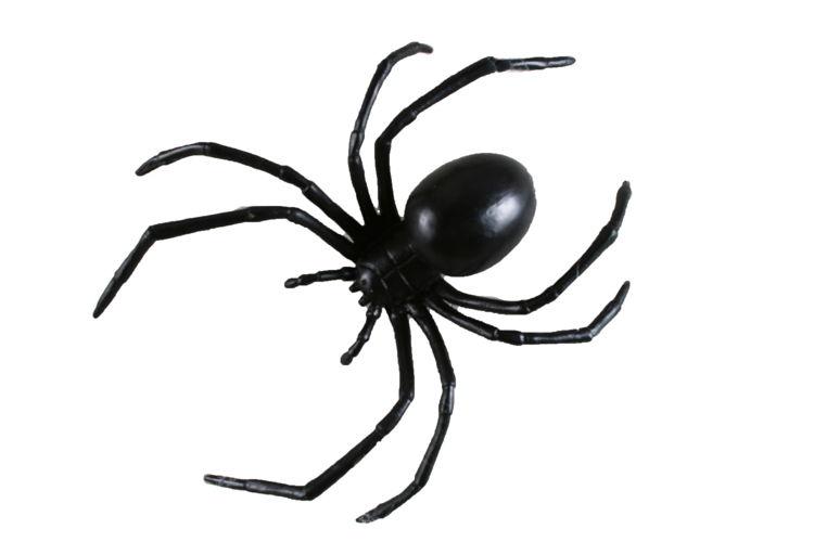BLACK WIDOW SPIDER 6inch