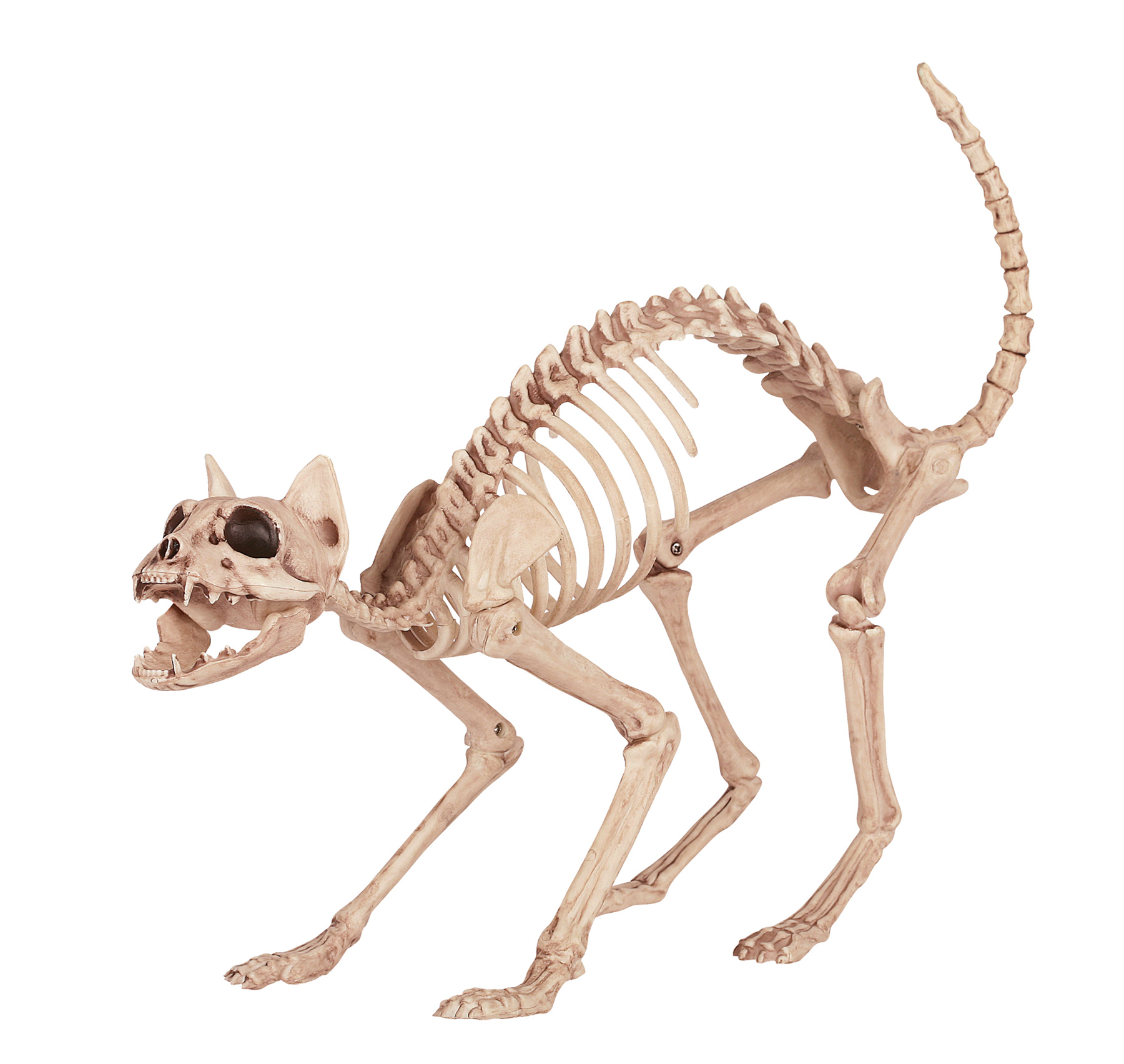 SKELETON KITTY BONEZ