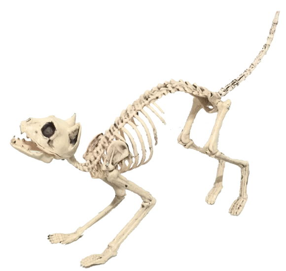 SONIC REALISTIC SKELETON CAT