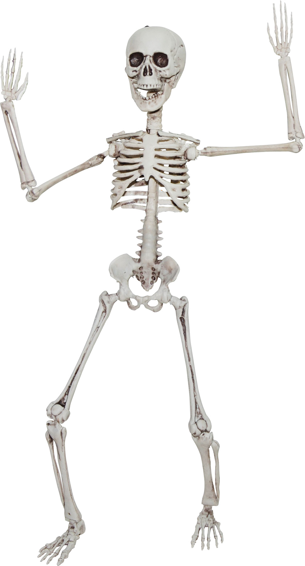 POSEABLE SKELETON 20 IN